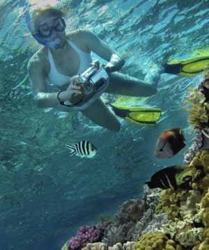 Calypso Reef Charters - QLD Tourism