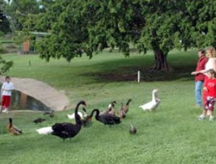 Anzac Park and Ululah Lagoon - QLD Tourism