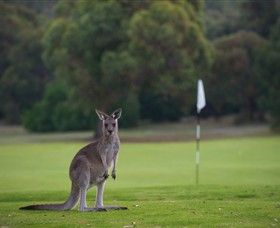 Anglesea Golf Club - QLD Tourism
