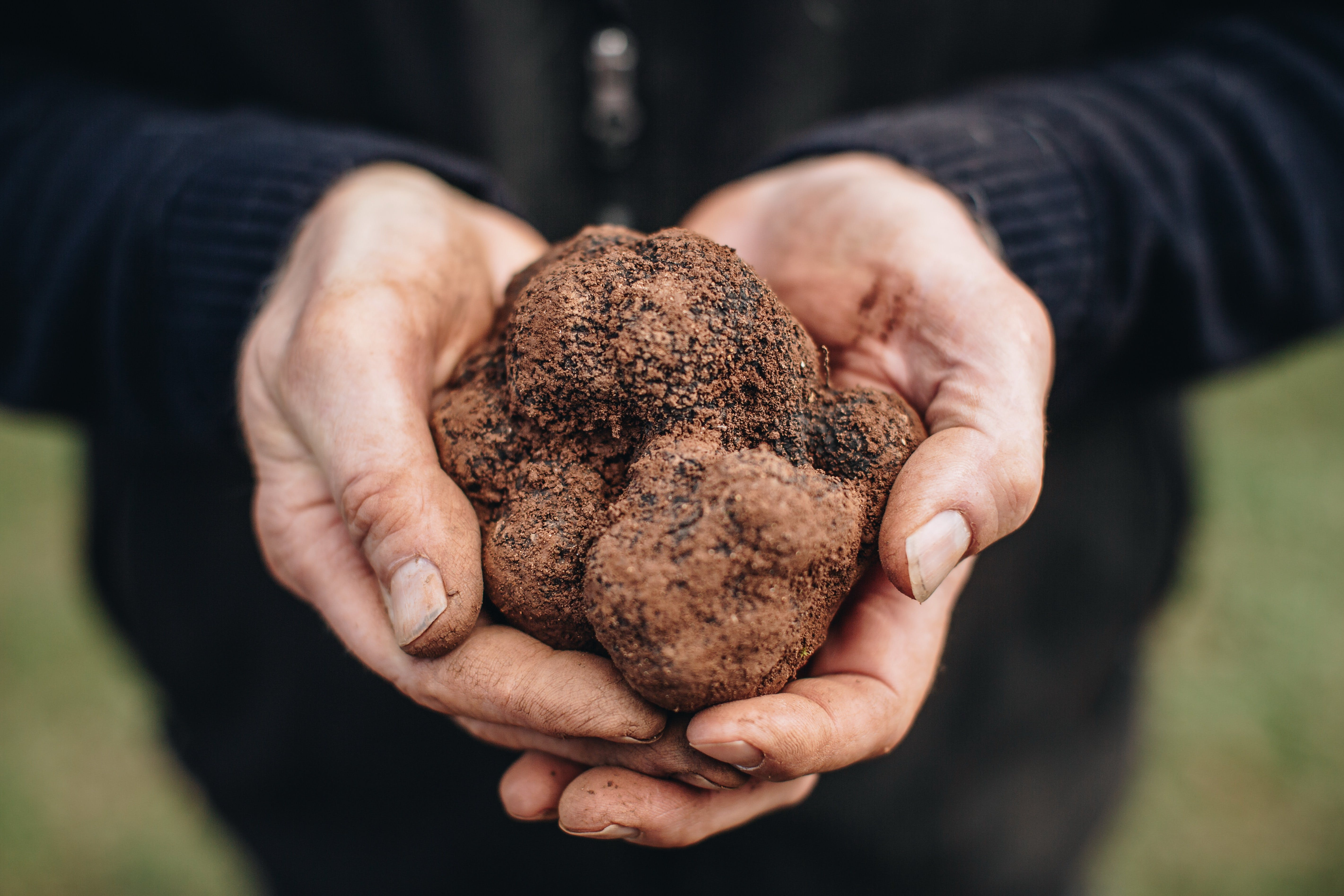 A Taste of Truffles - QLD Tourism