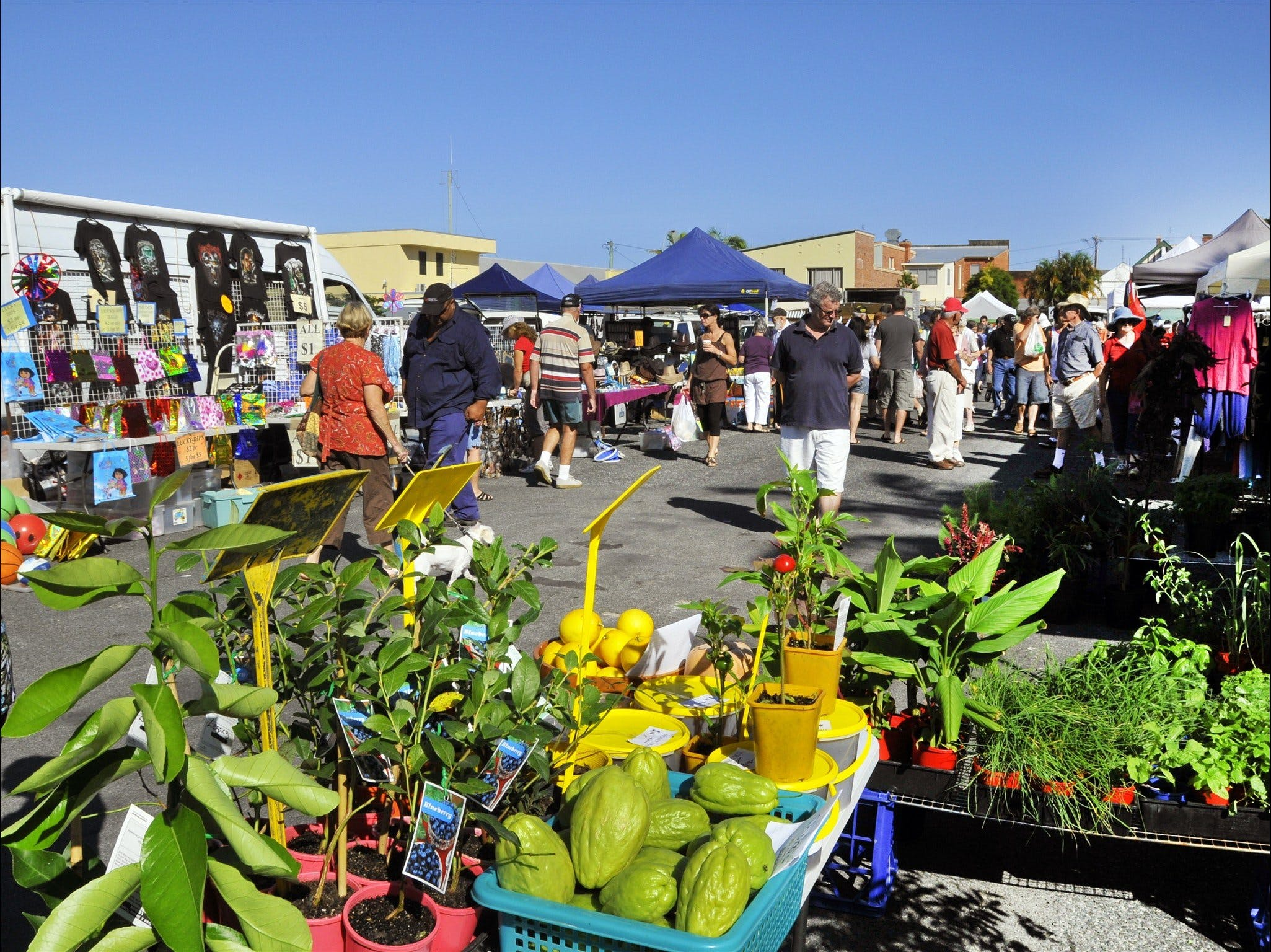 Maclean Community Monthly Markets - QLD Tourism
