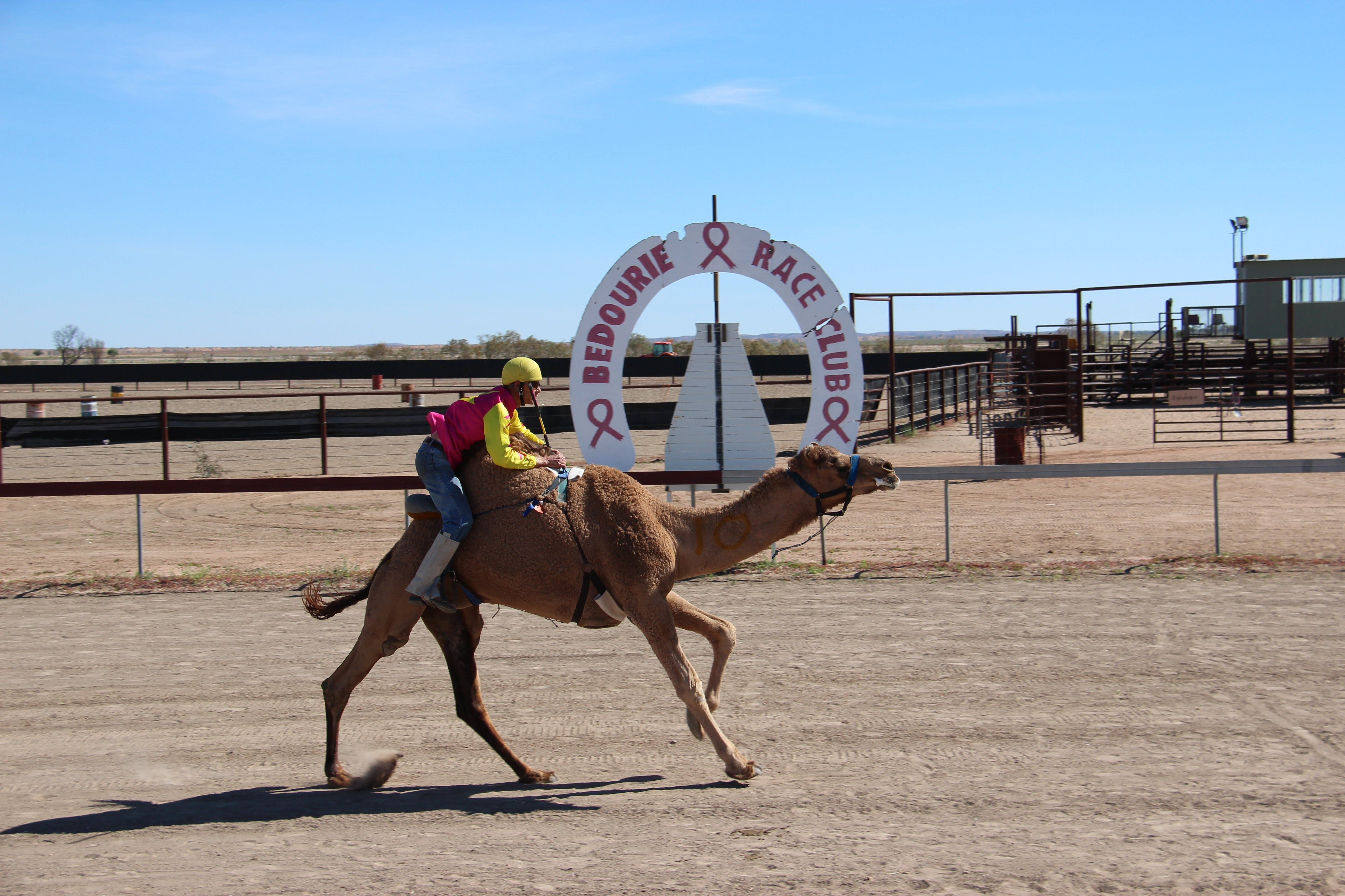 Bedourie Camel and Pig Races and Camp oven Cook-off - QLD Tourism