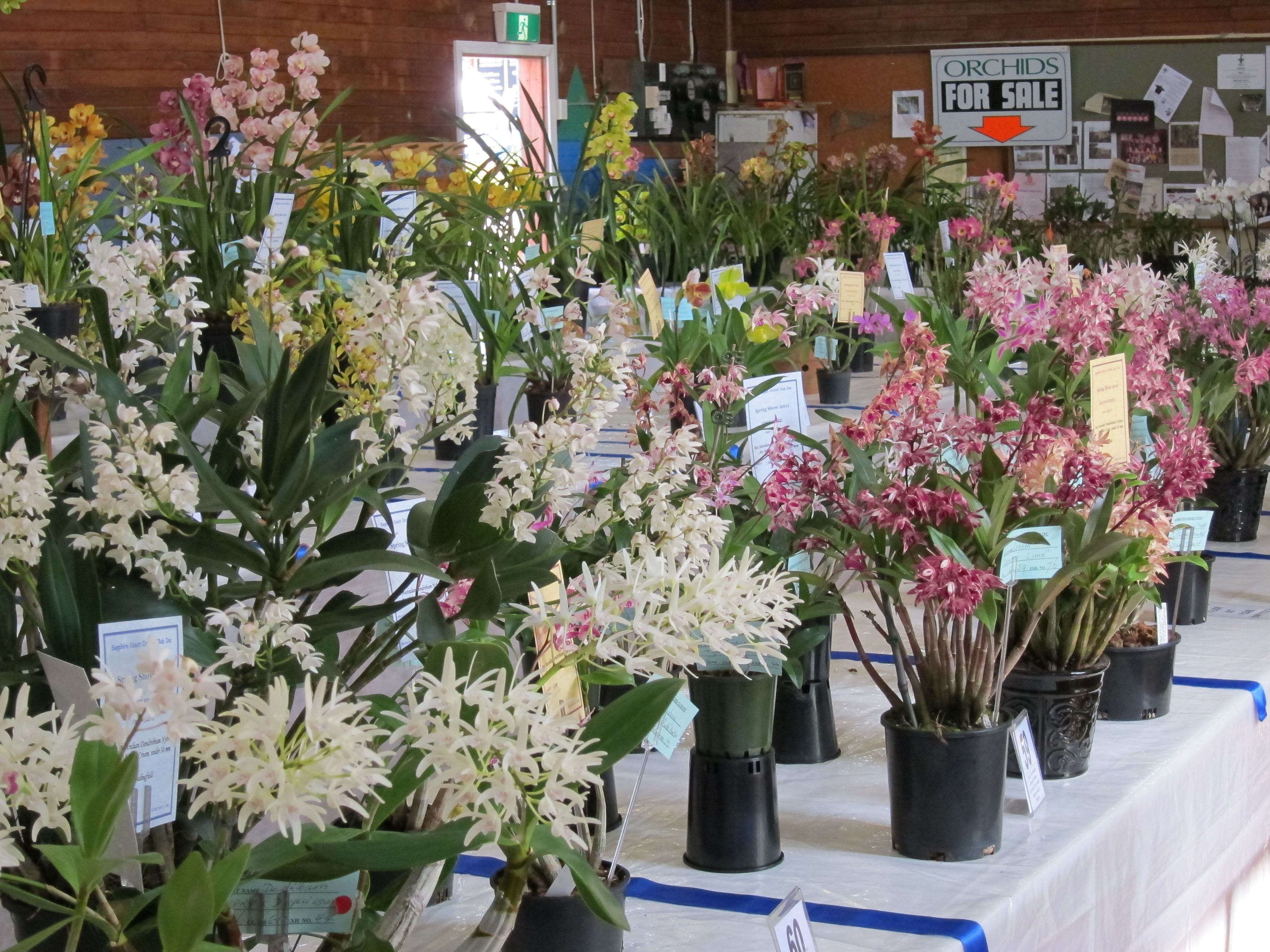 Sapphire Coast Orchid Club Spring Orchid Show - QLD Tourism