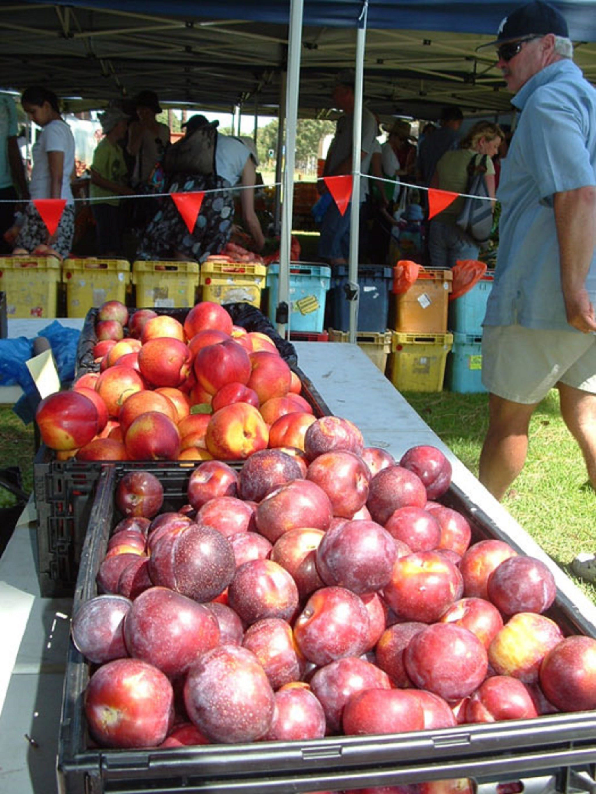 The Farmers Market on Manning - QLD Tourism