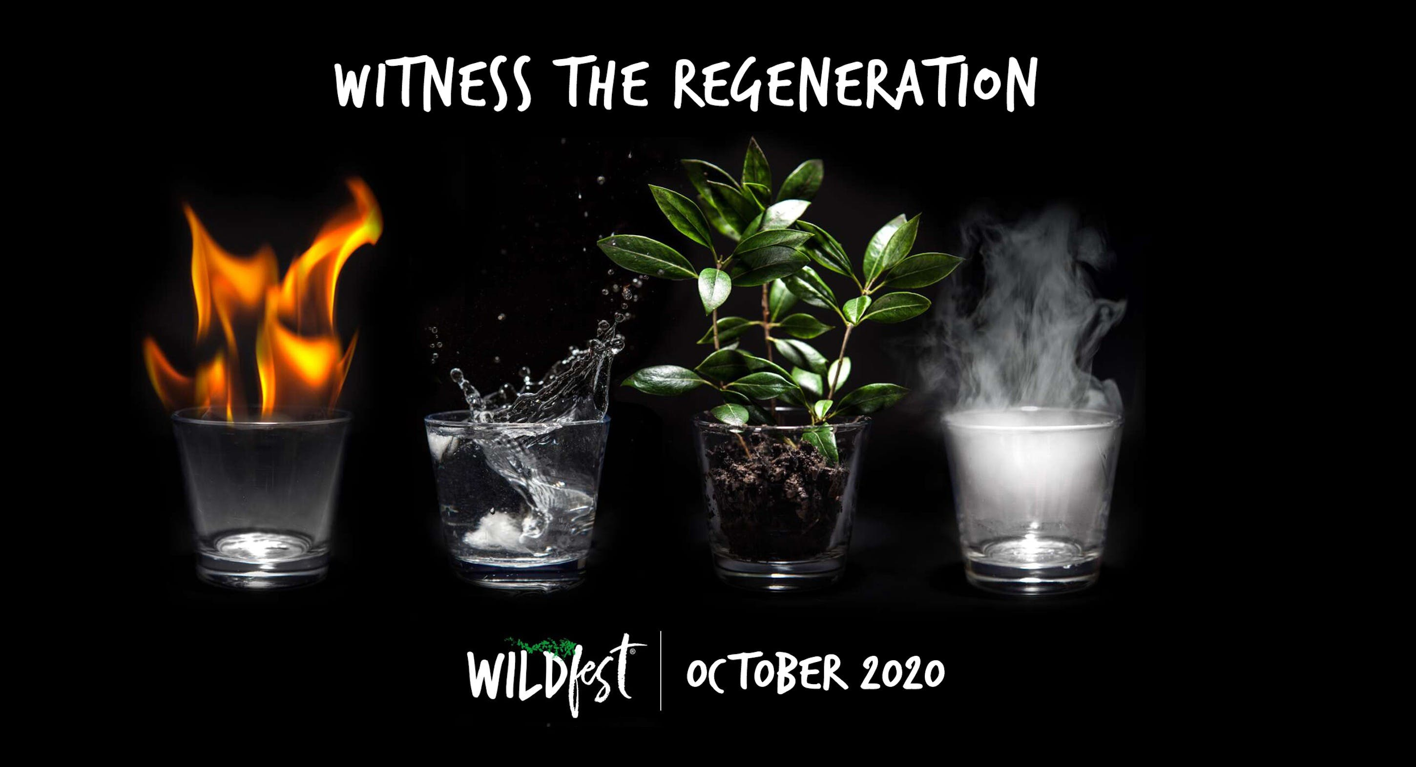 Wildfest - Annual Festival - QLD Tourism