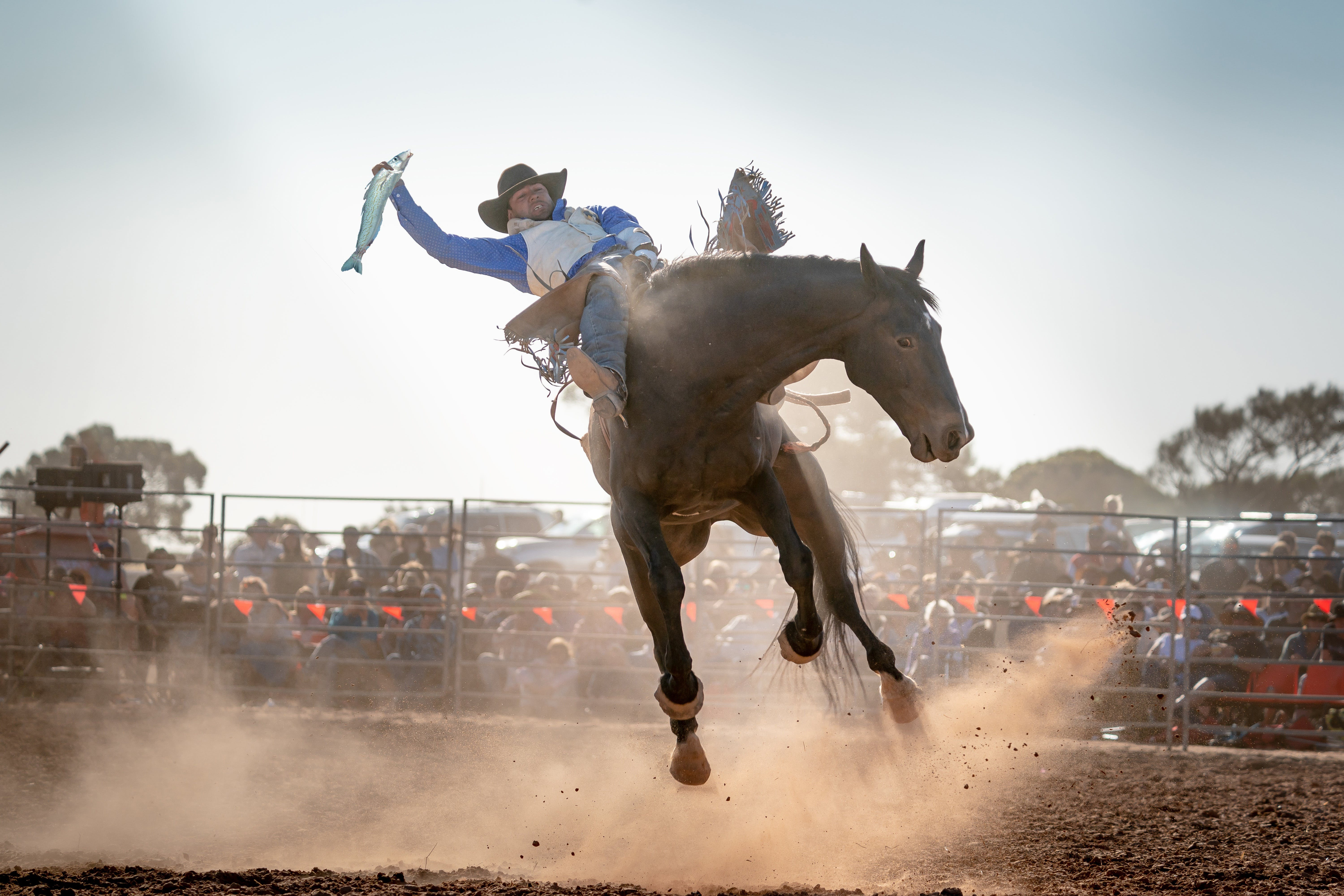 Rodeo by the Sea - Streaky Bay - QLD Tourism