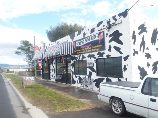 The Cow Shed - QLD Tourism