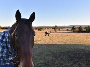 Clydesdale Cottage on Talga with real Clydesdale Horses - QLD Tourism