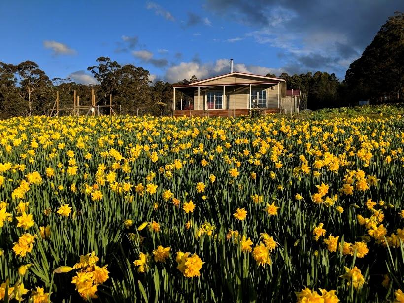 Mountain Blue Guest House - QLD Tourism