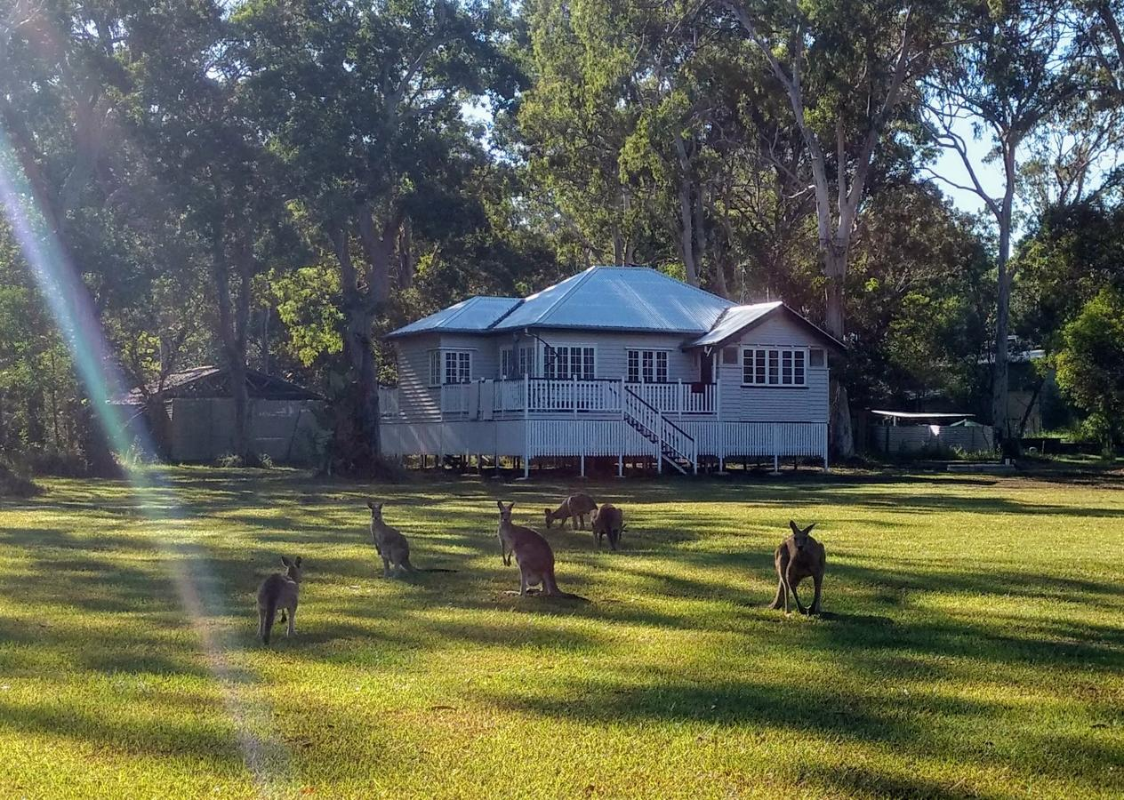 Lake Weyba Noosa Lodge  Kangaroos - QLD Tourism