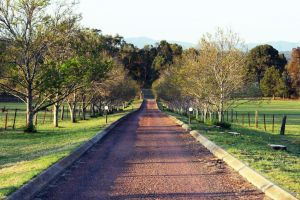 Blueberry Hill Vineyard Villa - QLD Tourism